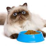 nourrir son chat